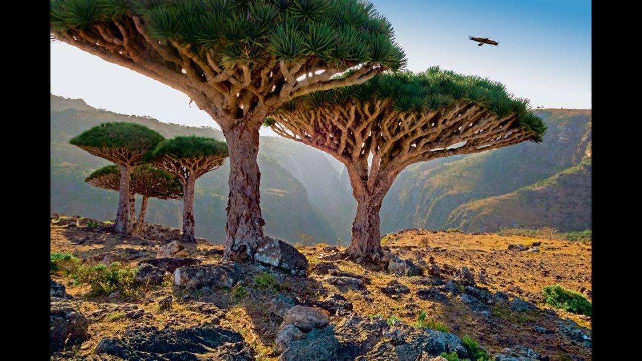 تراث اليمن 4